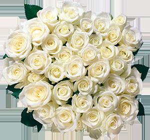 white-roses-grey-bkgnd